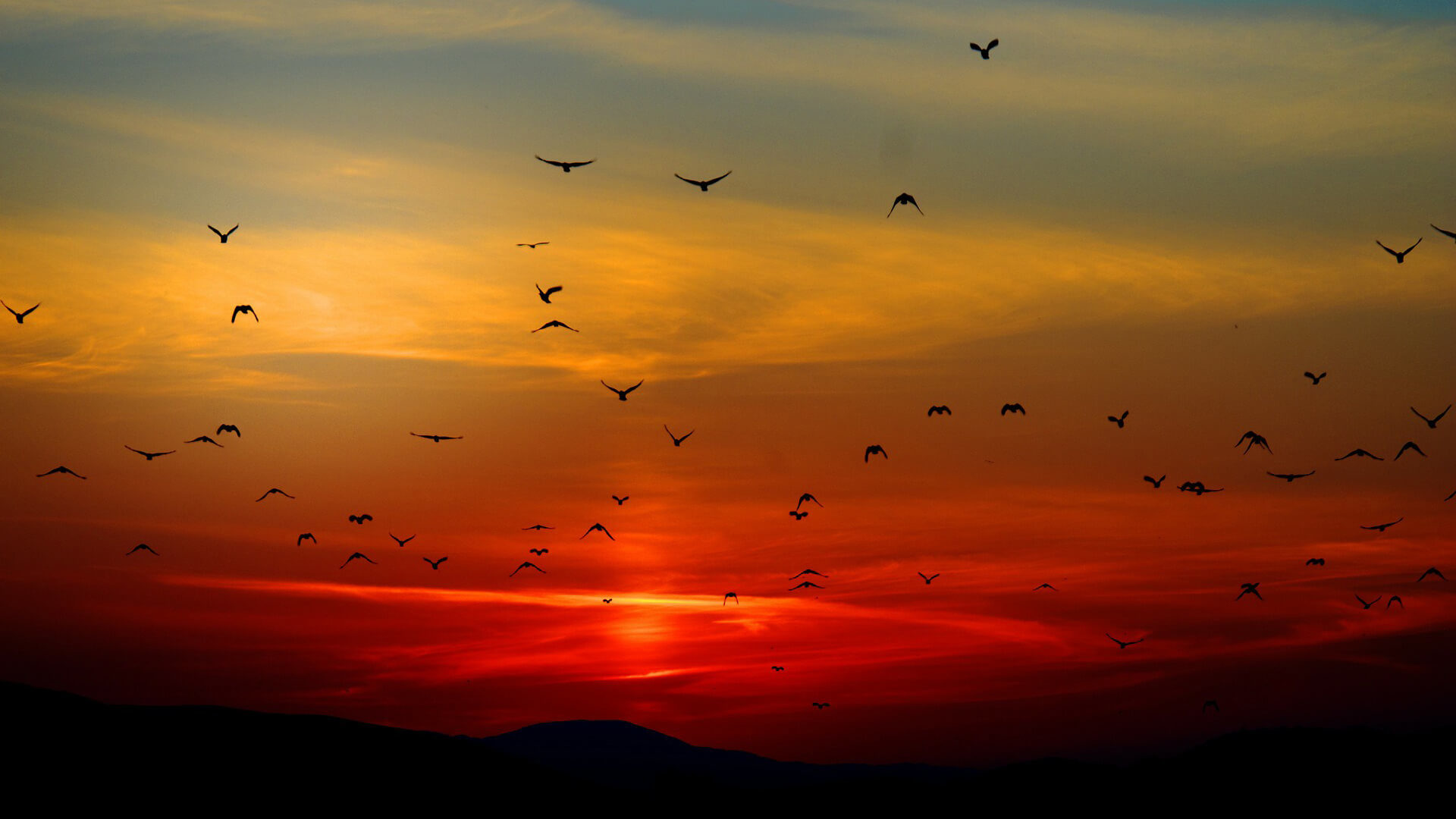 Wildlife Sunset