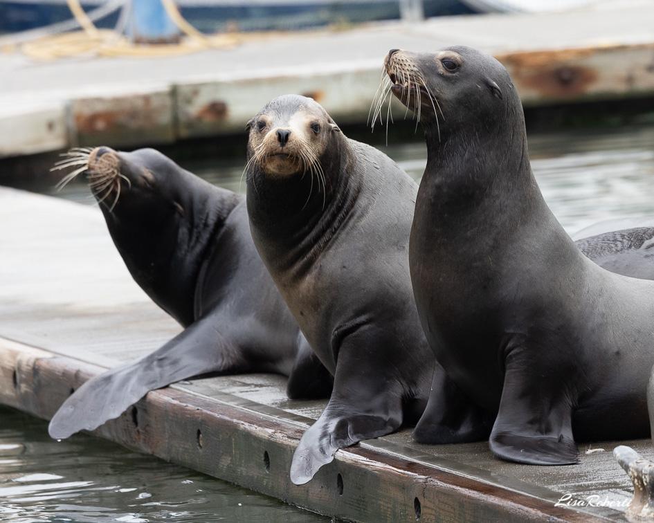Seals on a pier